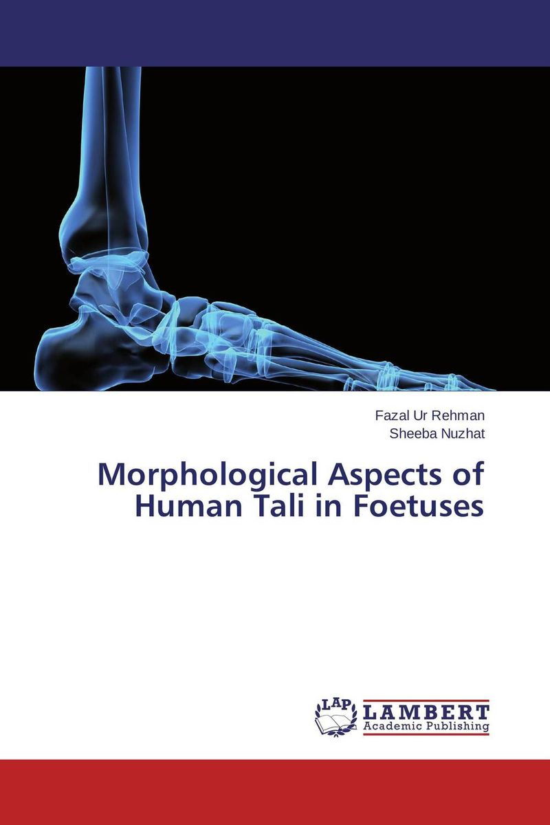 Morphological Aspects of Human Tali in Foetuses anatomy of a disappearance