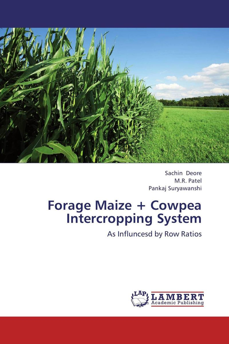 Forage Maize + Cowpea Intercropping System