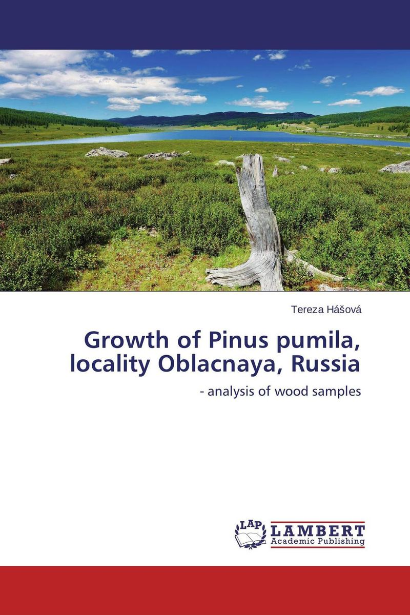 Growth of Pinus pumila, locality Oblacnaya, Russia the golden ring of russia vladimir suzdal
