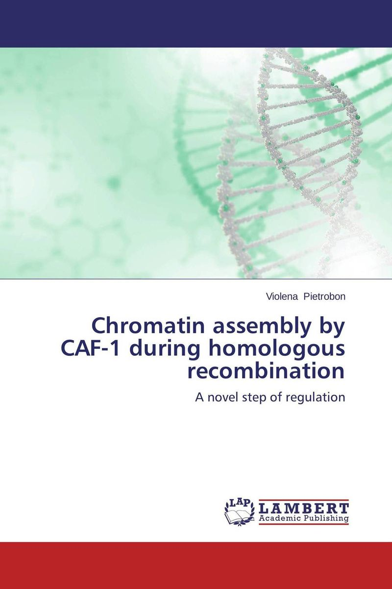 Chromatin assembly by CAF-1 during homologous recombination interplay between dna replication and repair