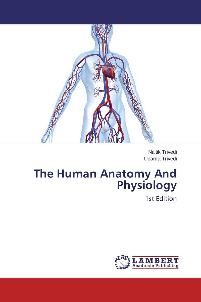 The Human Anatomy And Physiology 12417 cmam brain19 half size human nervous system study model medical science educational teaching anatomical models