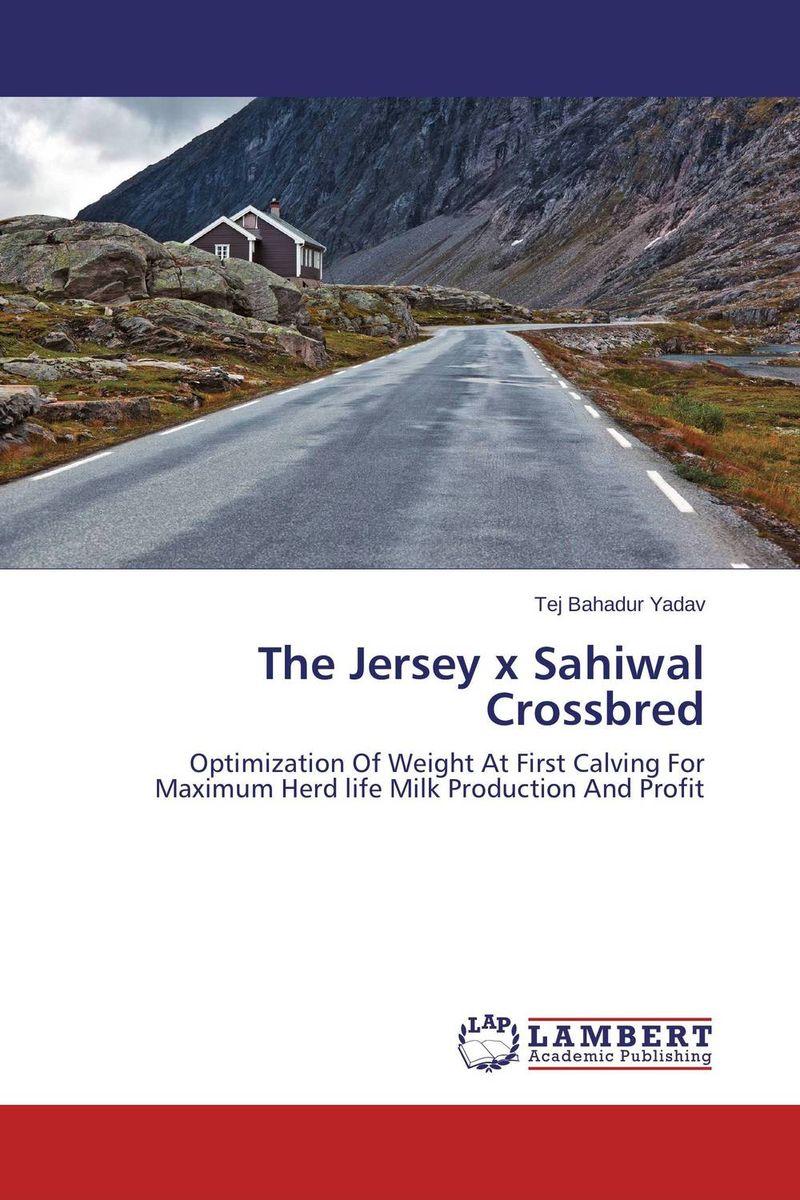 The Jersey x Sahiwal Crossbred