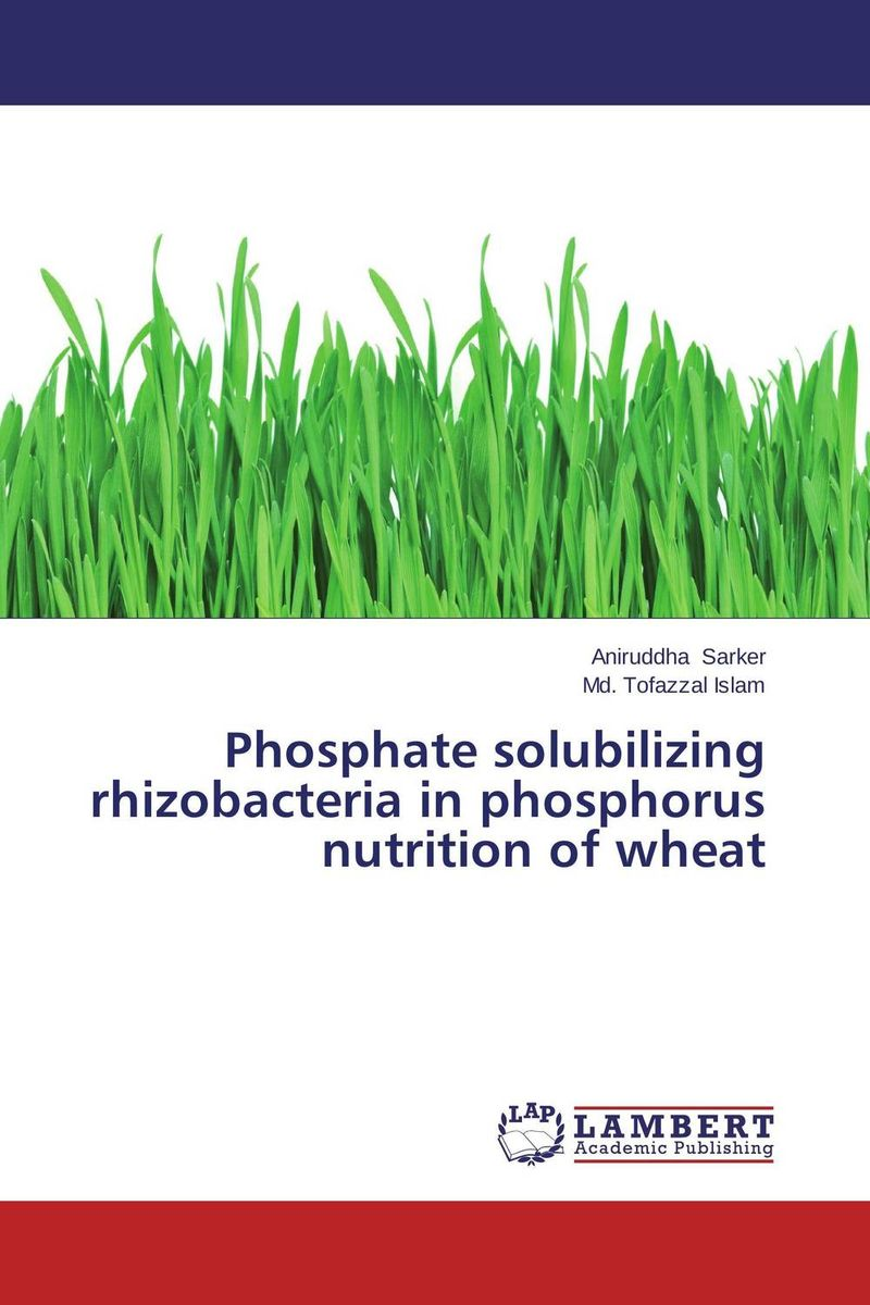 Phosphate solubilizing rhizobacteria in phosphorus nutrition of wheat plant growth promoting rhizobacteria