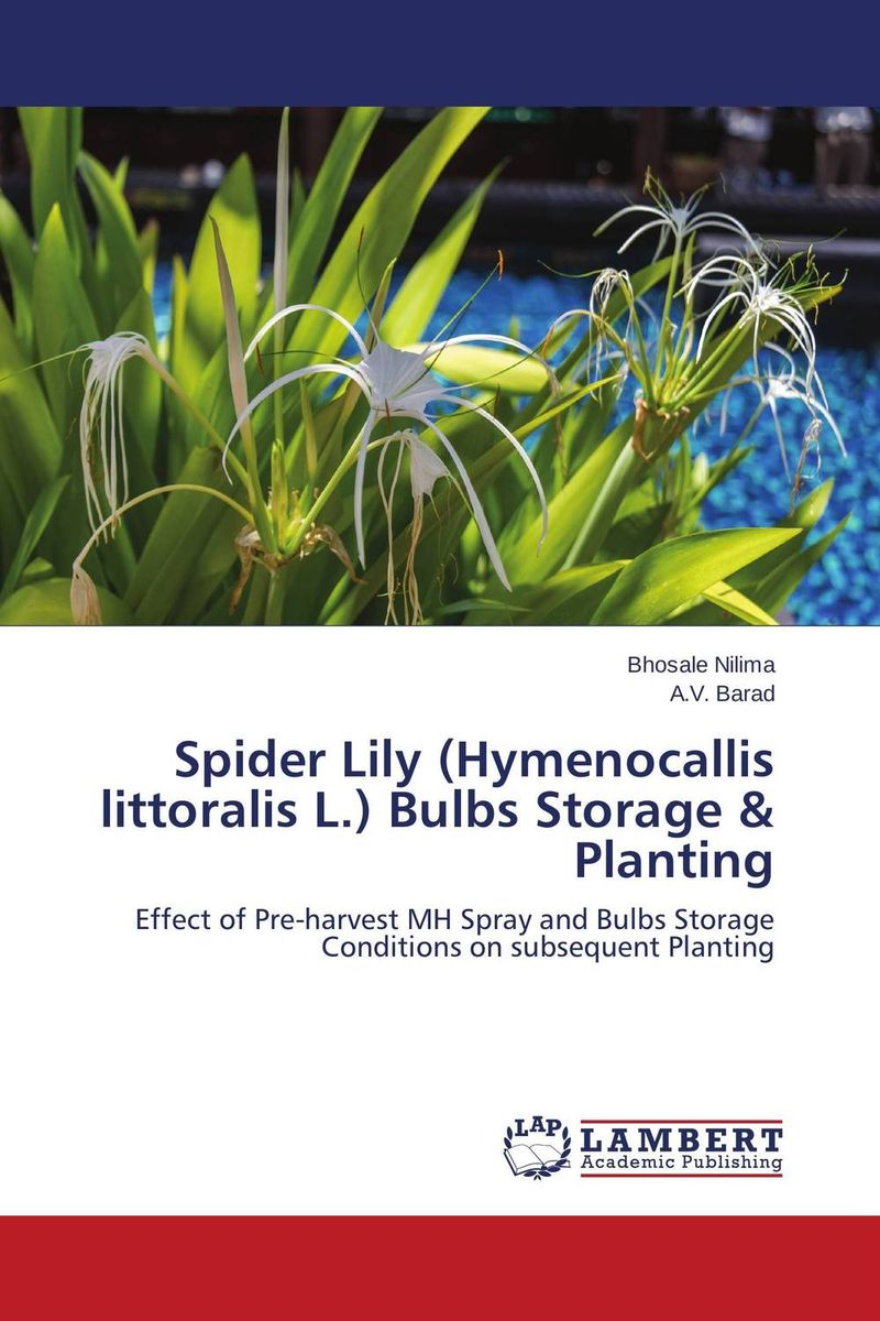 Spider Lily (Hymenocallis littoralis L.) Bulbs Storage & Planting hatsune miku anime figure figma 200 juguetes pvc action figure collectible brinquedos model doll kids toys 14cm