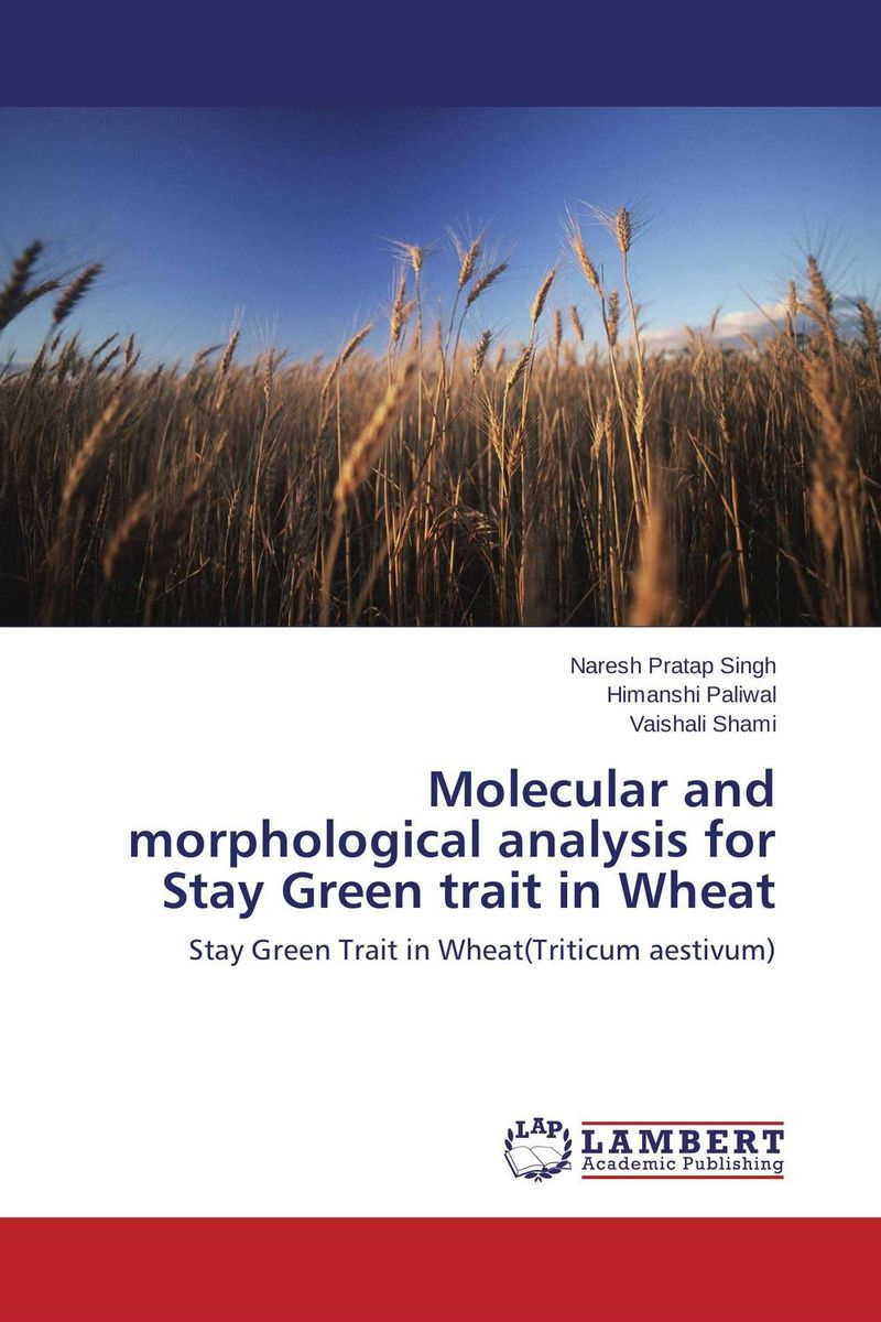 Molecular and morphological analysis for Stay Green trait in Wheat
