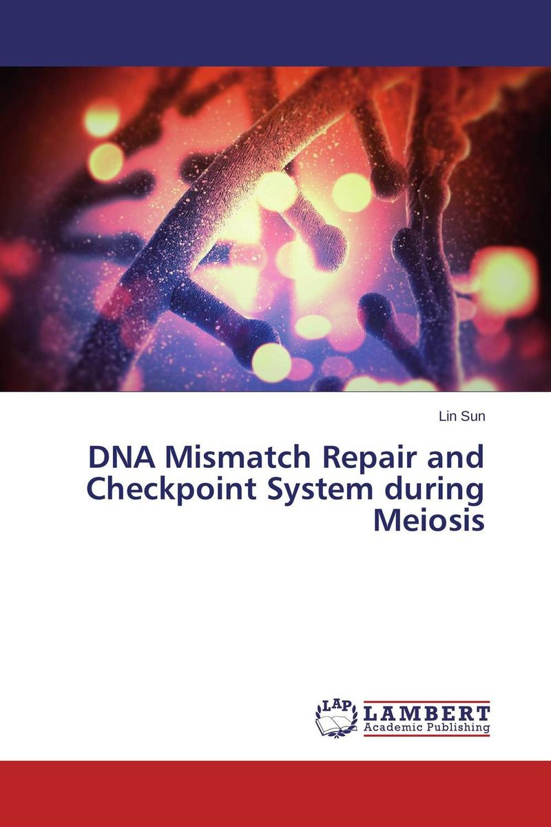 DNA Mismatch Repair and Checkpoint System during Meiosis interplay between dna replication and repair