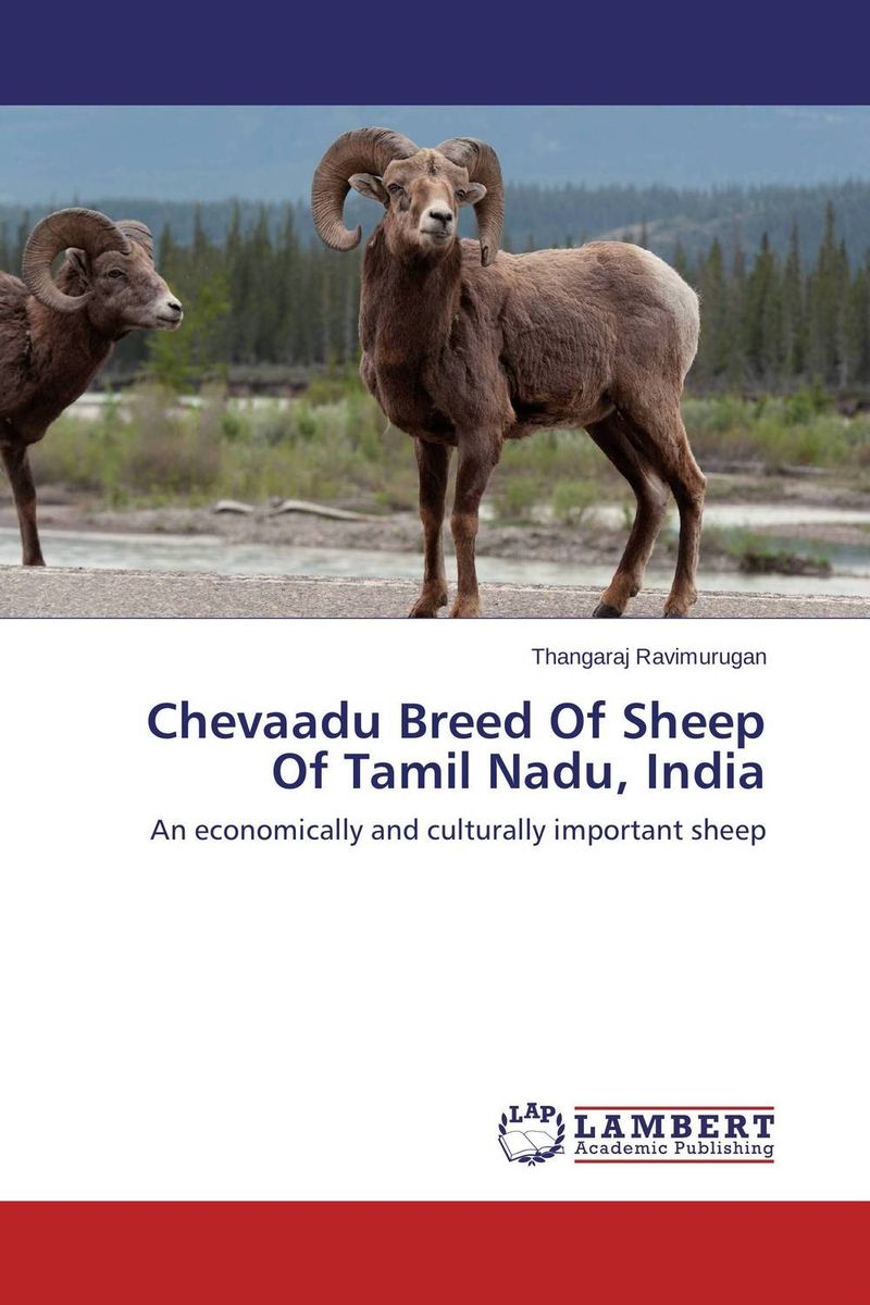 Chevaadu Breed Of Sheep Of Tamil Nadu, India affair of state an