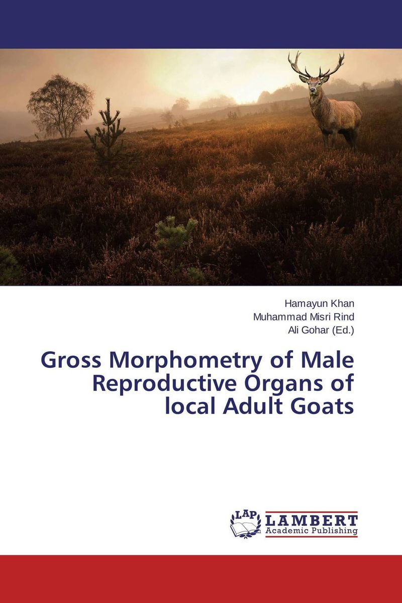 Gross Morphometry of Male Reproductive Organs of local Adult Goats male genital organs male genitalia anatomical model structure male reproductive organs decomposition model