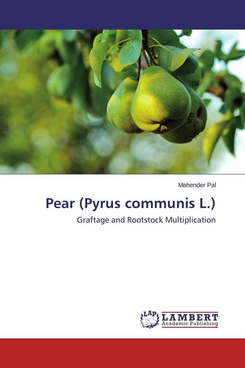 Pear (Pyrus communis L.) майка классическая printio sadhus of india