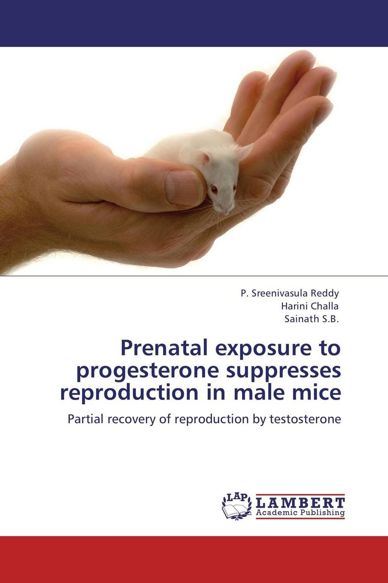 Prenatal exposure to progesterone suppresses reproduction in male mice male genital organs male genitalia anatomical model structure male reproductive organs decomposition model