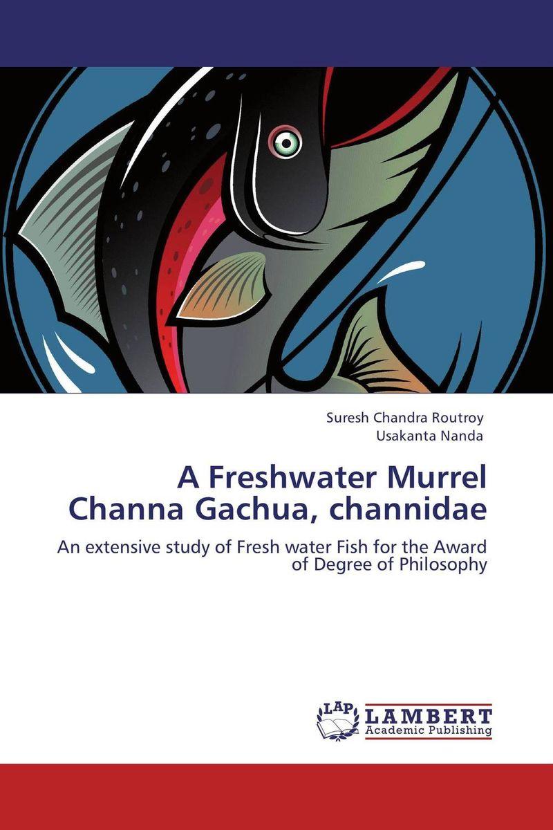 A Freshwater Murrel Channa Gachua, channidae