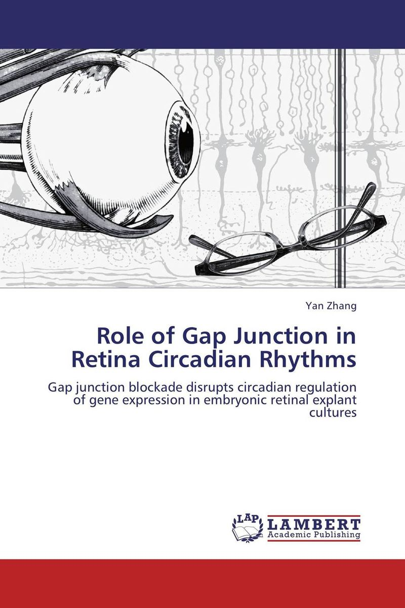 Role of Gap Junction in Retina Circadian Rhythms лонгслив gap gap ga020ewvdq20