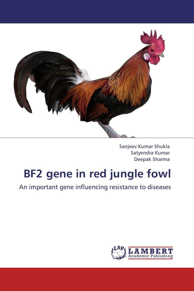 BF2 gene in red jungle fowl