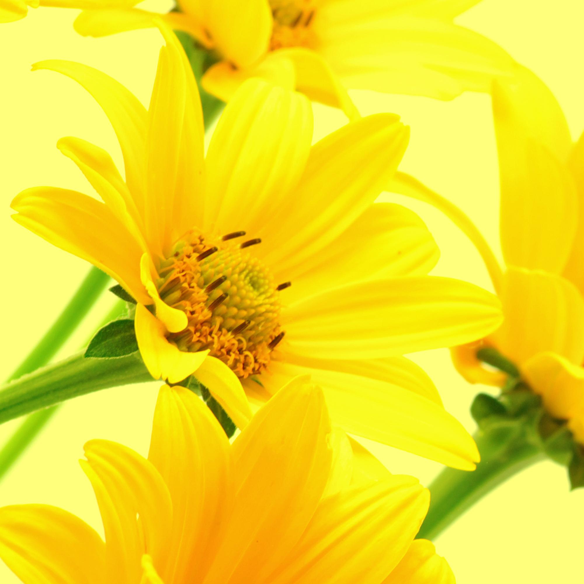 Салфетки бумажные Gratias Желтые герберы, трехслойные, 20 шт4Трехслойные бумажные салфетки Gratias Желтые герберы, выполненные из натуральной целлюлозы с изображением желтых гербер, станут отличным дополнением любого праздничного стола. Они отличаются необычной мягкостью, прочностью и оригинальностью. Состав: 100% целлюлоза. Размер салфетки: 33 см х 33 см.Количество слоев: 3.Количество салфеток: 20 шт.