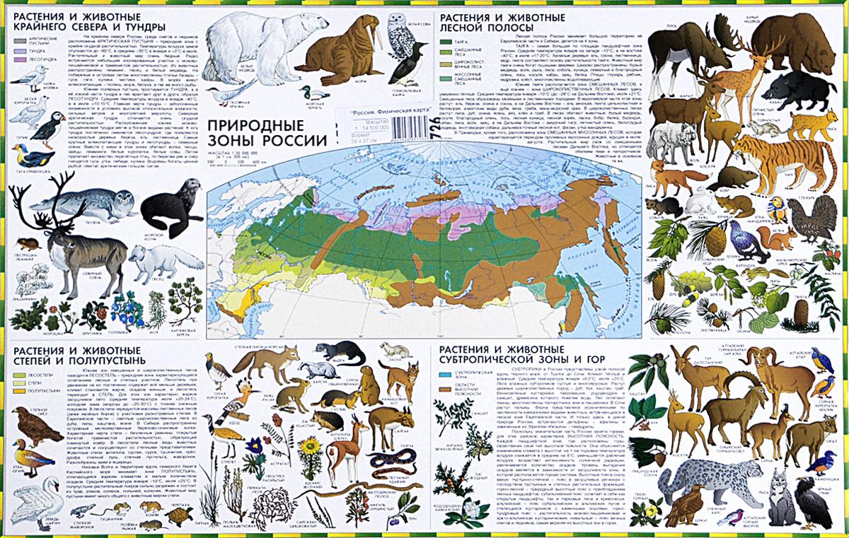 картинки животных и растений природных зон начинающих