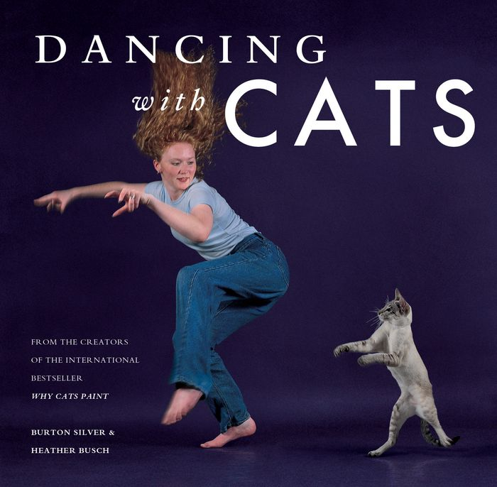 Dancing with Cats a cat that doesn t like its home
