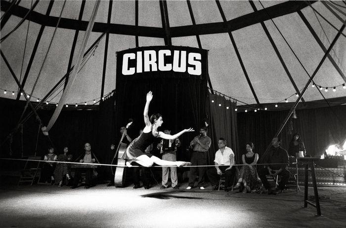Circus no stars at the circus