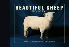 Beautiful Sheep: Postcard Book 30pcs in one postcard owe you a song romantic love christmas postcards greeting birthday message cards 10 2x14 2cm