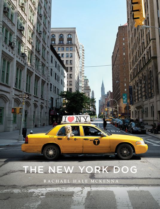 New York Dog, The heir of the dog