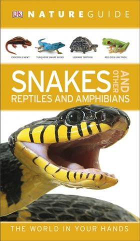 Nature Guide Snakes and Other Reptiles and Amphibians reptiles and amphibians of qatar