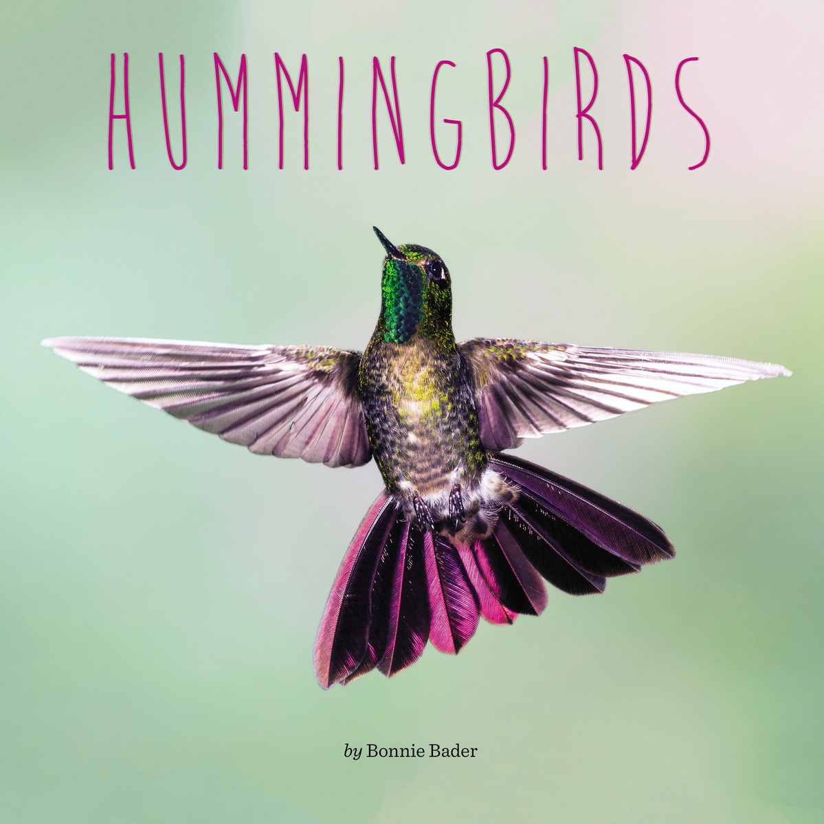 HUMMINGBIRDS seeing things as they are