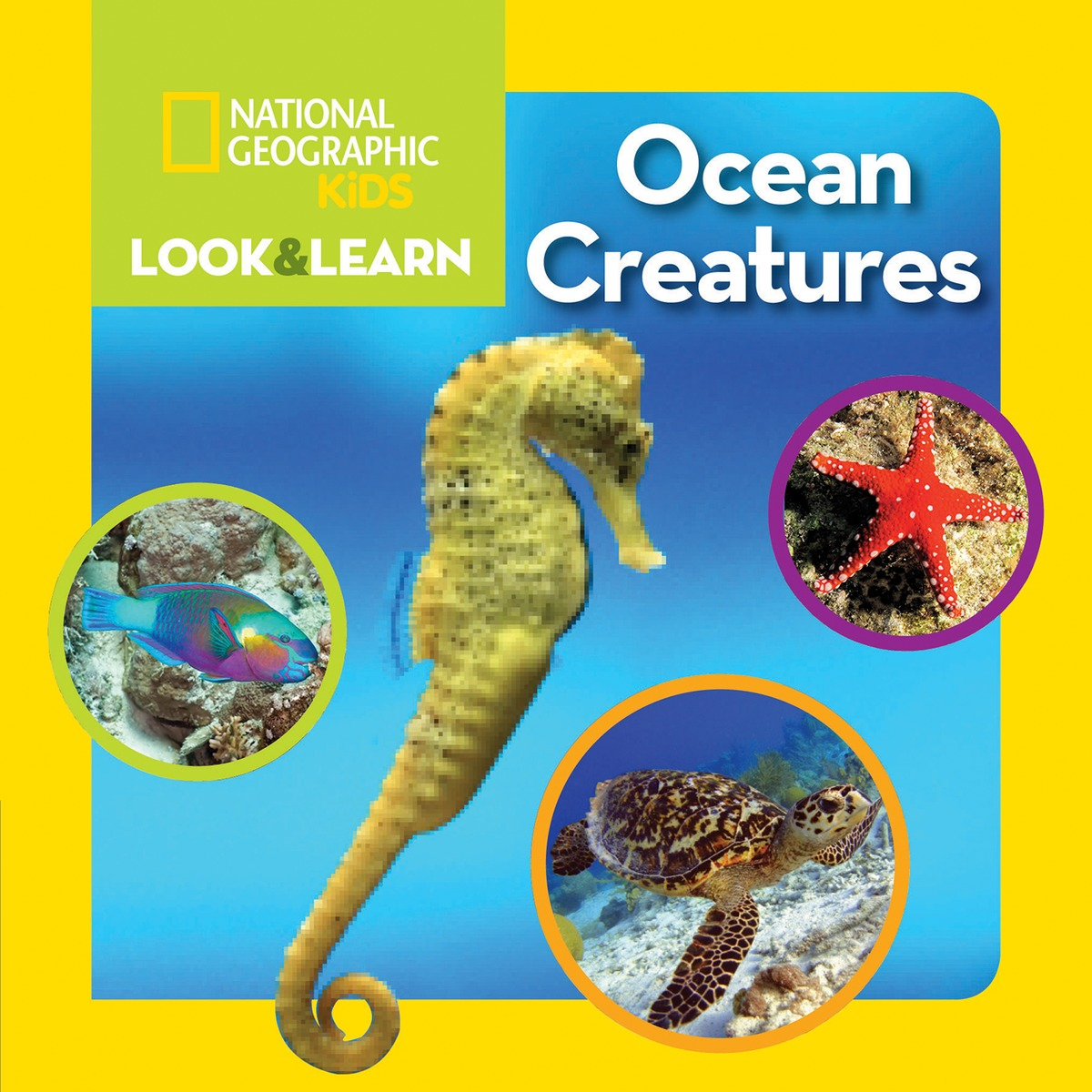 LOOK AND LEARN: OCEAN CREATURE beautiful darkness