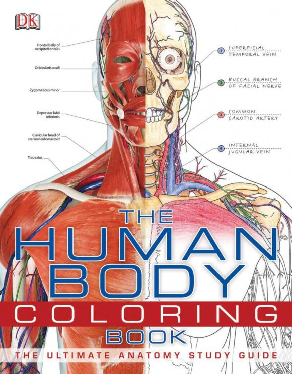 The Human Body Coloring Book my own very hungry caterpillar coloring book