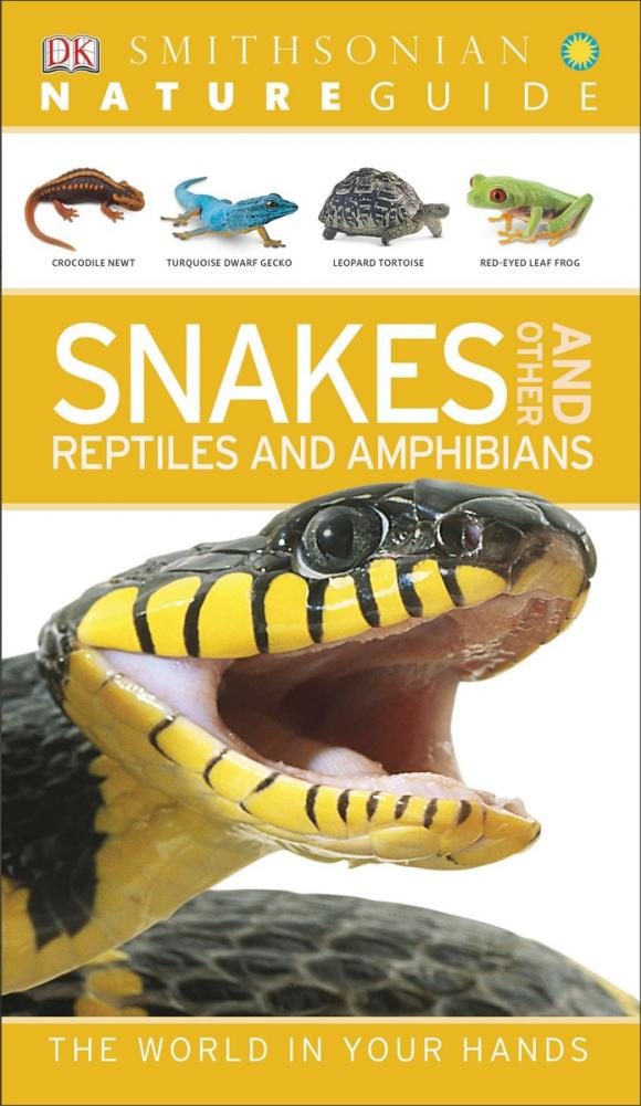 Nature Guide: Snakes and Other Reptiles and Amphibians reptiles and amphibians of qatar