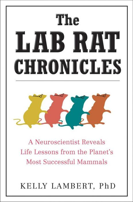 The Lab Rat Chronicles enhancing the tourist industry through light