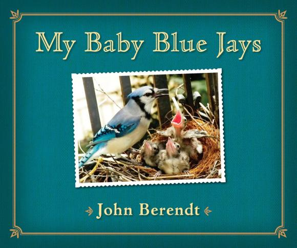 где купить My Baby Blue Jays дешево