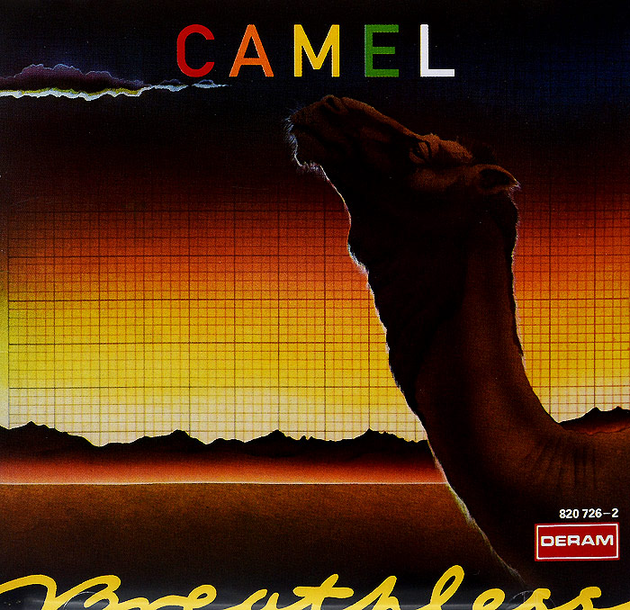 Camel Camel. Breathless camel footage