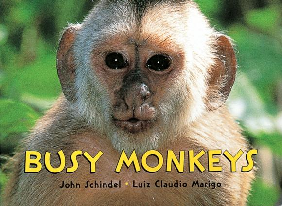 Купить Busy Monkeys