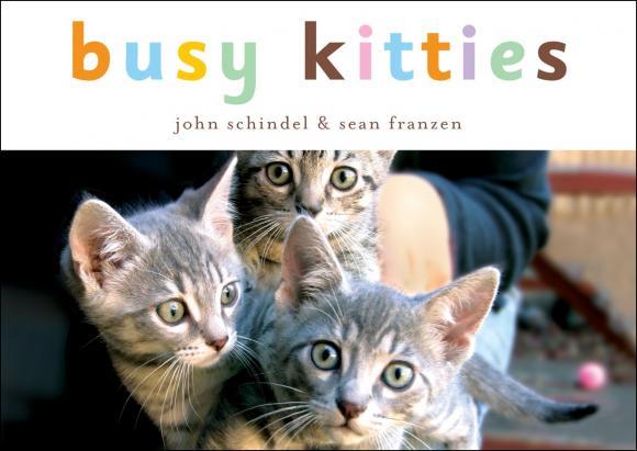 Busy Kitties john schindel busy kitties