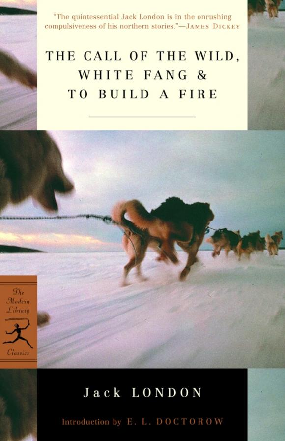 The Call of the Wild, White Fang & To Build a Fire white fang