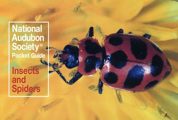 National Audubon Society Pocket Guide to Familiar Insects and Spiders secret weapons – defenses of insects spiders scorpions and other many–legged creatures