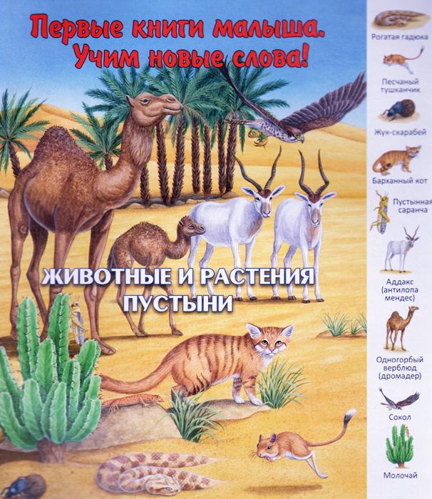 Животные и растения пустыни купить сандали антилопа для мальчика