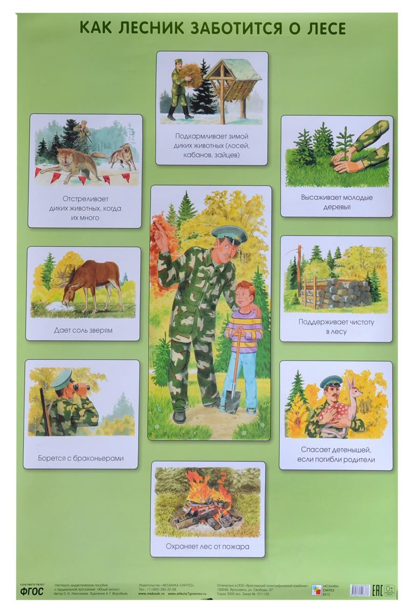 С. Н. Николаева Как лесник заботится о лесе. Плакат