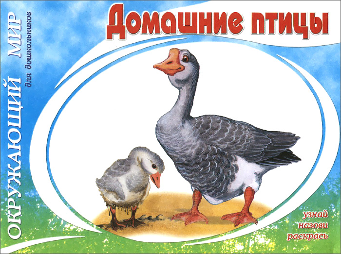 Домашние птицы костина в ред домашние птицы 16 обучающих карточек