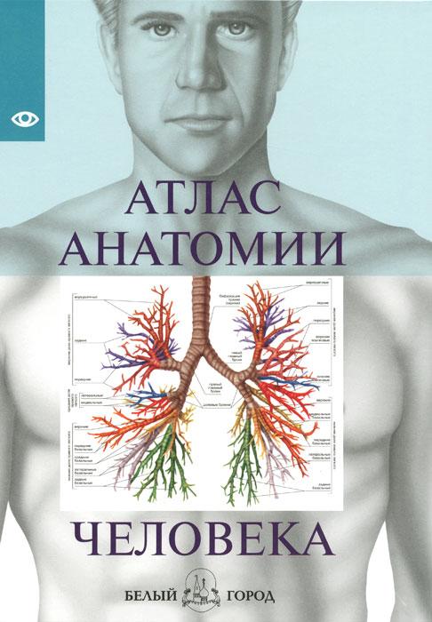 Атлас анатомии человека иллюстрированный атлас анатомии и физиологии человека