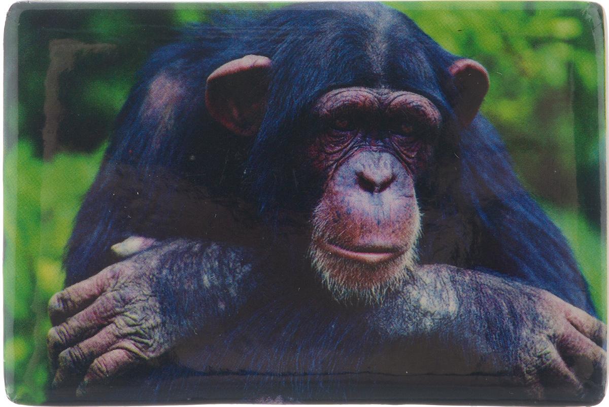 Магнит Sima-land Задумчивая обезьянка, 7,5 см x 5 см1057297Магнит Sima-land Задумчивая обезьянка, выполненный из керамики и агломерированного феррита, станет приятным штрихом в повседневной жизни. Оригинальный магнит, декорированный изображением обезьяны, поможет вам украсить не только холодильник, но и любую другую магнитную поверхность. Материал: керамика, агломерированный феррит.