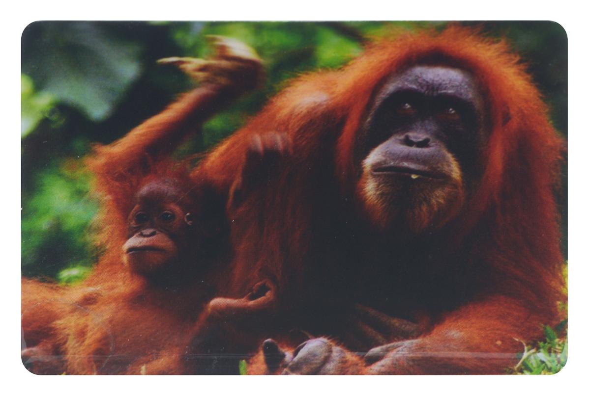 Магнит Sima-land Добрые глаза обезьянки, 7,5 см x 5 см1057292Магнит Sima-land Добрые глаза обезьянки, выполненный из керамики и агломерированного феррита, станет приятным штрихом в повседневной жизни. Оригинальный магнит, декорированный изображением обезьян, поможет вам украсить не только холодильник, но и любую другую магнитную поверхность. Такой магнит пополнит коллекцию уже существующих сувениров или станет началом новой коллекции. Он надолго сохранит память о замечательном дне и о том, кто вручил подарок.Материал: керамика, агломерированный феррит.