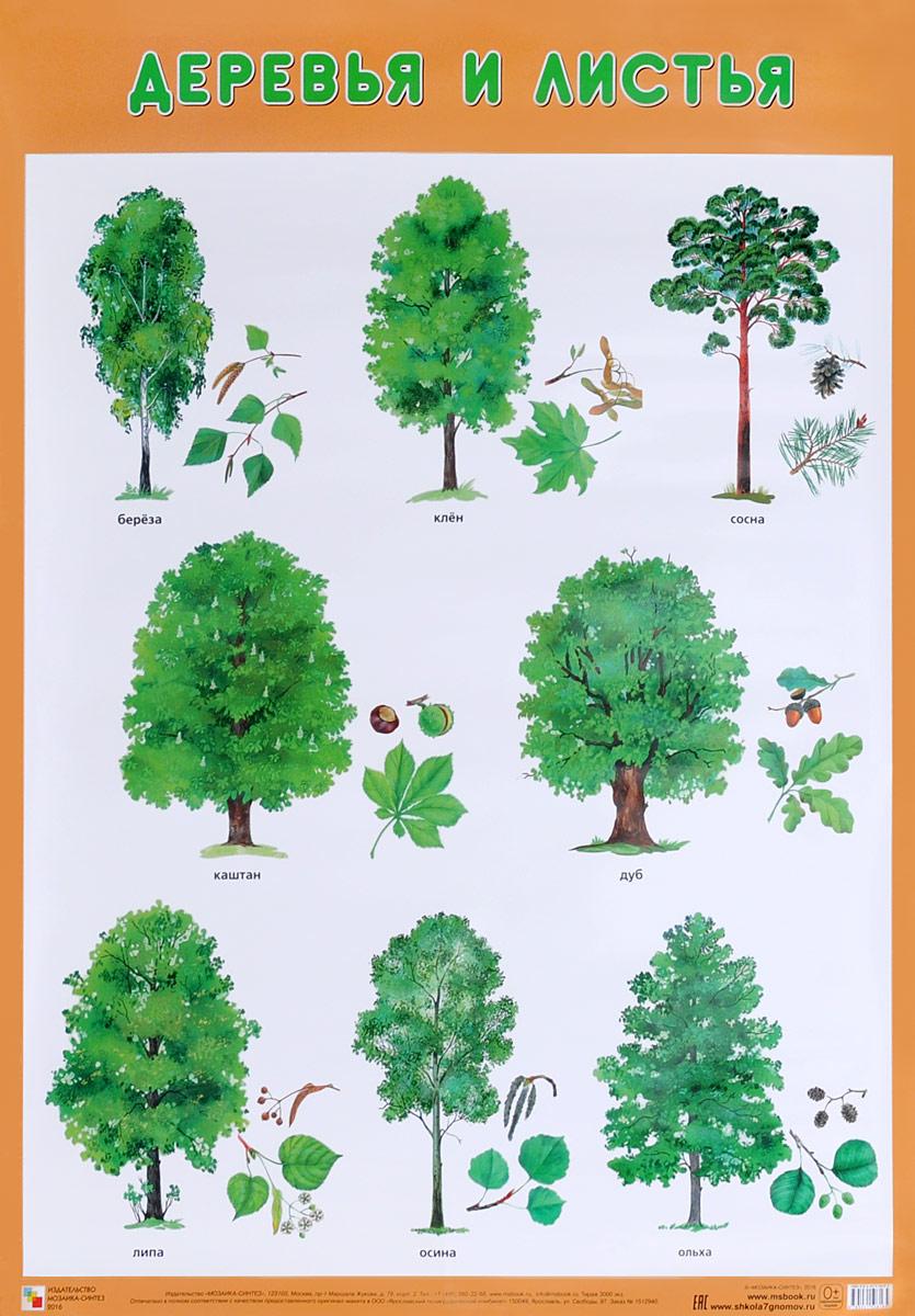 Деревья и листья. Плакат камилла де ла бедуайер деревья