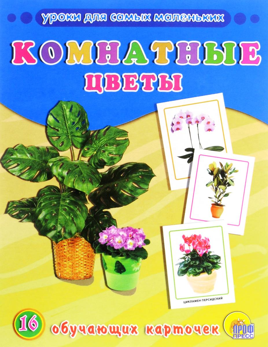Комнатные цветы (набор из 16 обучающих карточек) комнатные цветы в горшках купить в воронеже