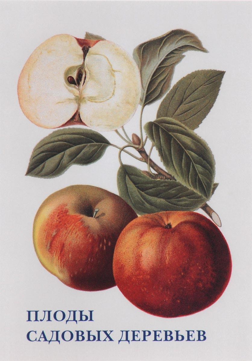 , Плоды садовых деревьев (набор из 15 открыток) н иртенина ушаков адмирал от бога биография ф ф ушакова для детей