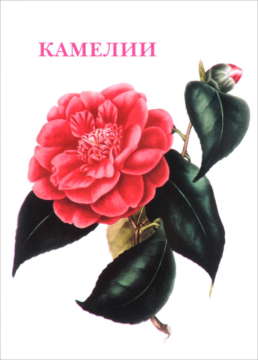 цены Камелии (набор из 15 открыток)