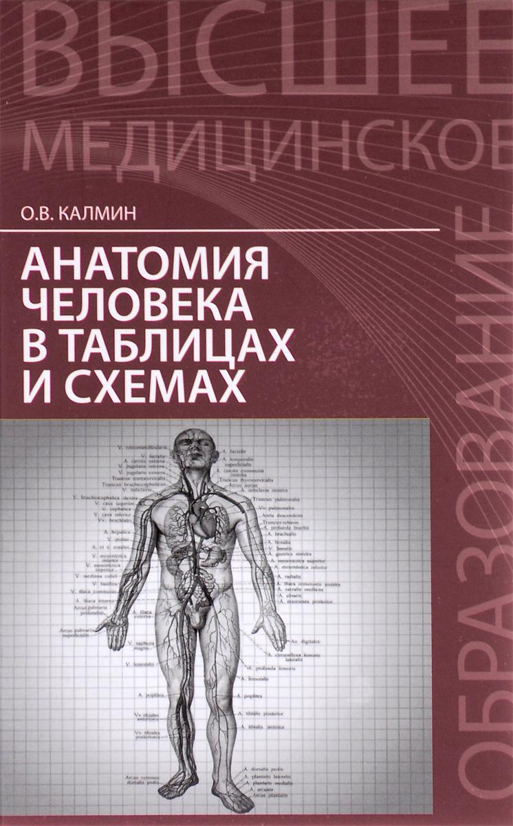 Анатомия человека в таблицах и схемах. Учебное пособие