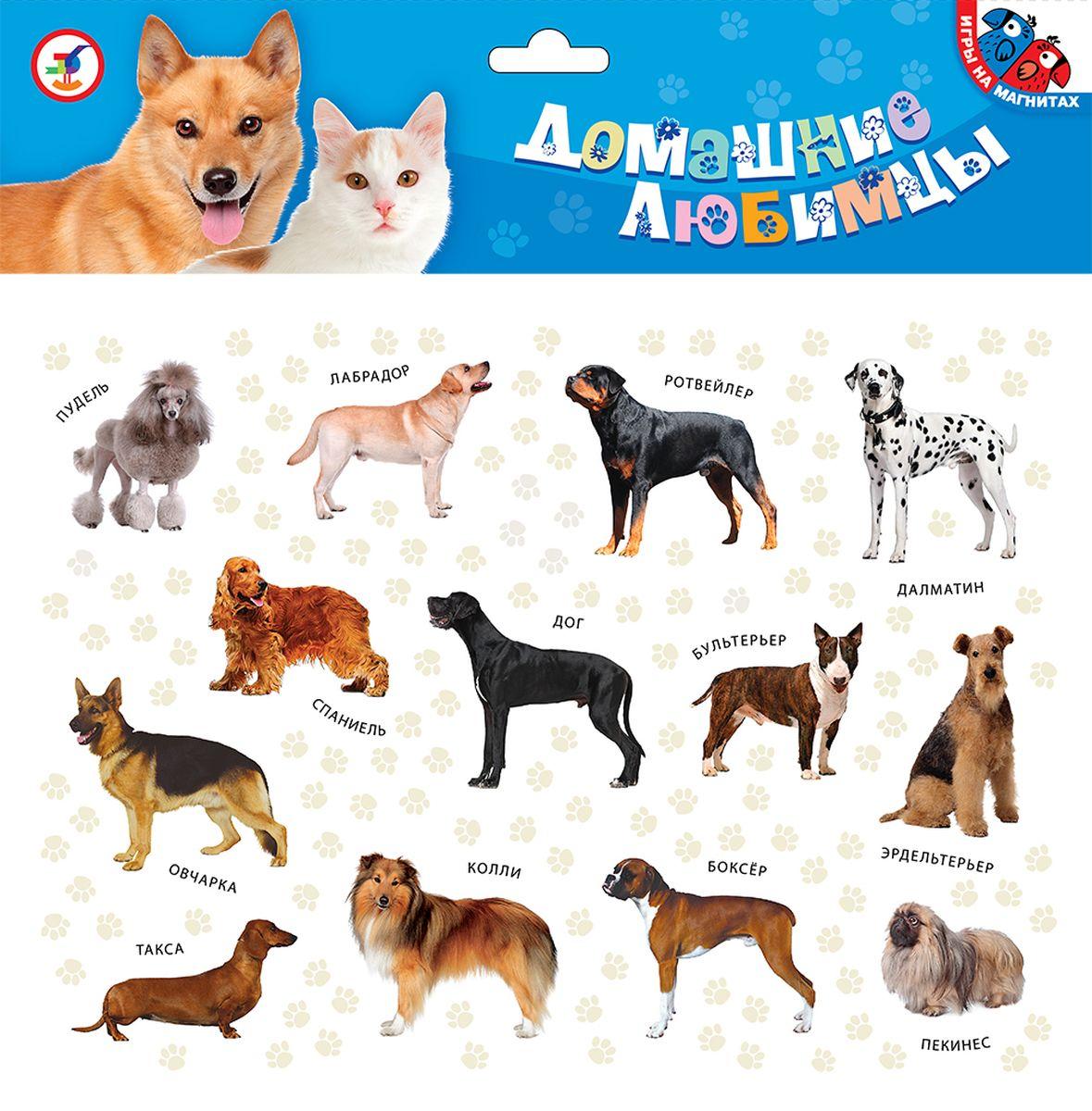 Дрофа-Медиа Игра на магнитах Домашние любимцы дрофа медиа магнит в коробке карточки с животными на магнитах