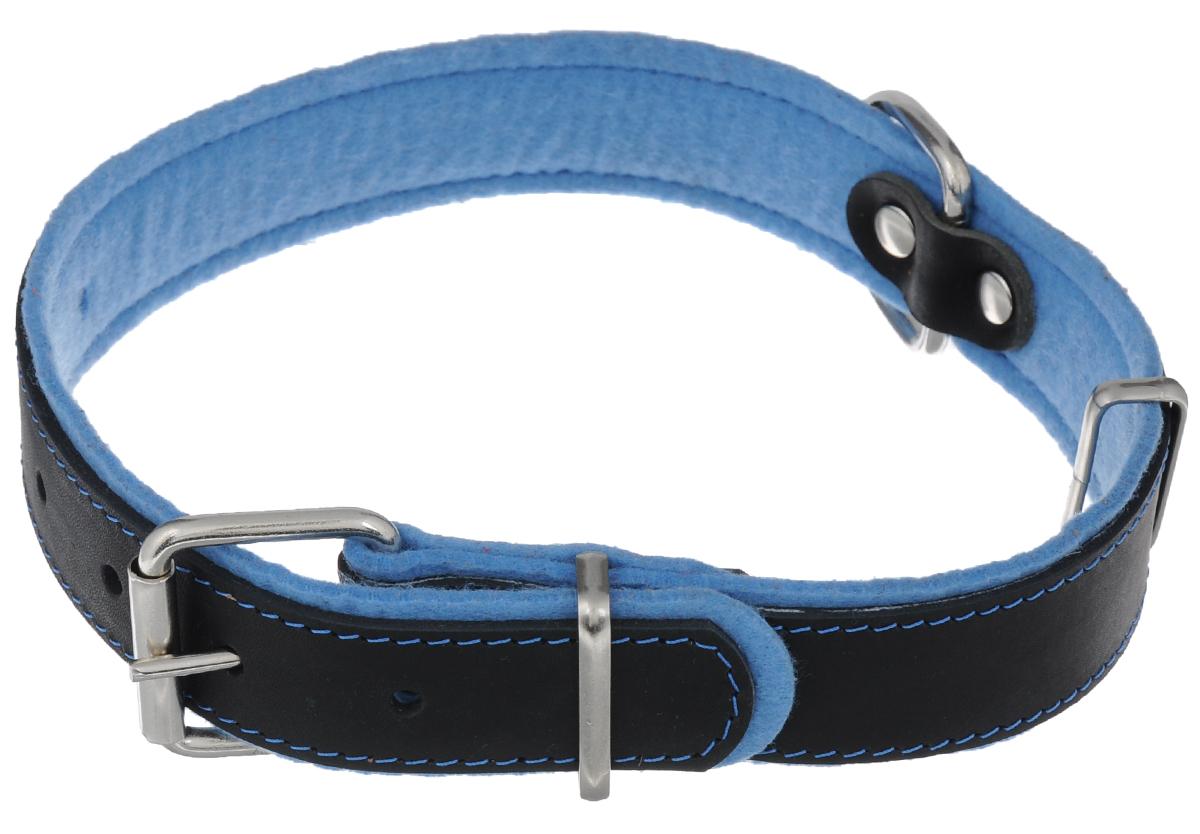 Ошейник Аркон Фетр, цвет: черный, голубой, ширина 3,5 см, длина 61 см. оф35оф35гОшейник Аркон Фетр изготовлен из высококачественной натуральной кожи, устойчивой к влажности и перепадам температур, и фетра. Мягкий фетр предотвратит натирание шеи собаки ошейником и позволит ей с комфортом наслаждаться прогулкой.Клеевой слой, сверхпрочные нити, крепкие металлические элементы делают ошейник надежным и долговечным.Изделие отличается высоким качеством, удобством и универсальностью.Размер ошейника регулируется при помощи пряжки, зафиксированной на одном из 6 отверстий. Минимальный обхват шеи: 41 см. Максимальный обхват шеи: 55 см. Ширина: 3,5 см.