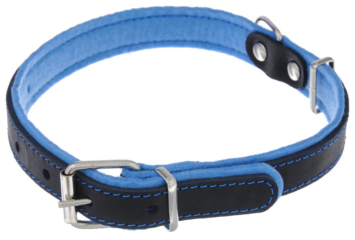 Ошейник для собак Аркон Фетр, цвет: черный, голубой, ширина 2,5 см, длина 57 смоф25гОшейник Аркон Фетр изготовлен из высококачественной натуральной кожи, устойчивой к влажности и перепадам температур, и фетра. Мягкий фетр предотвратит натирание шеи собаки ошейником и позволит ей с комфортом наслаждаться прогулкой. Размер ошейника регулируется с помощью металлической пряжки, которая фиксируется на одном из 6 отверстий изделия. Ошейник отличается высоким качеством, удобством и универсальностью.Минимальный обхват шеи: 35 см. Максимальный обхват шеи: 49 см. Ширина: 2,5 см.