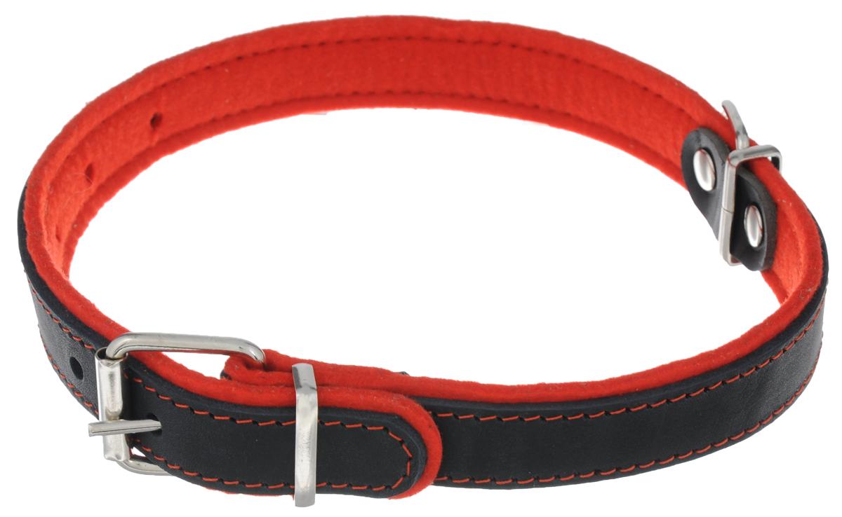 Ошейник для собак Аркон Фетр, цвет: черный, красный, ширина 2,5 см, длина 57 смоф25кОшейник Аркон Фетр изготовлен из высококачественной натуральной кожи, устойчивой к влажности и перепадам температур, и фетра. Мягкий фетр предотвратит натирание шеи собаки ошейником и позволит ей с комфортом наслаждаться прогулкой. Размер ошейника регулируется с помощью металлической пряжки, которая фиксируется на одном из 6 отверстий изделия. Ошейник отличается высоким качеством, удобством и универсальностью.Минимальный обхват шеи: 35 см. Максимальный обхват шеи: 49 см. Ширина: 2,5 см.